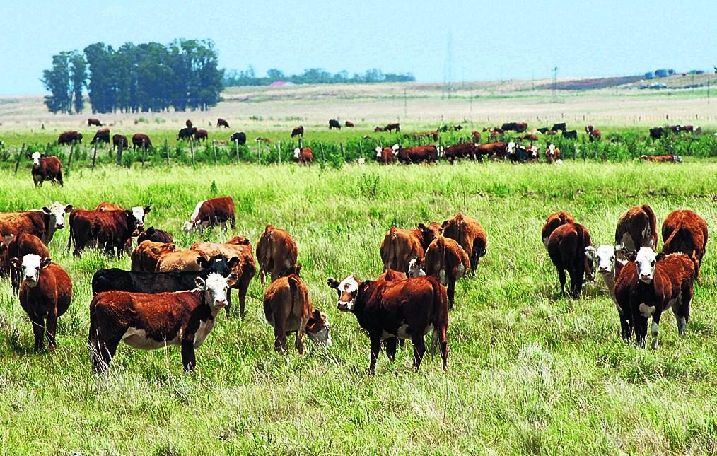 Mercados de la carne bovina buscan garantizar seguridad alimentaria