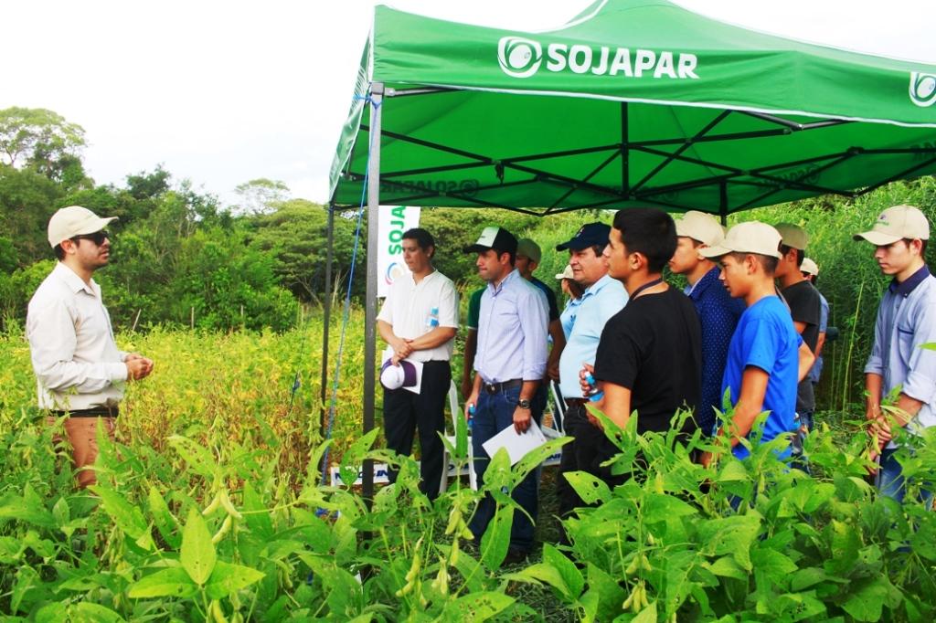 Variedades Sojapar con alto rendimiento pese a la sequía y las enfermedades