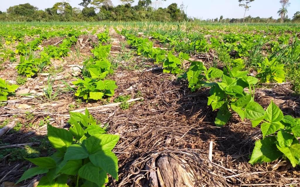 La siembra directa secuestra más carbono y cuida el suelo